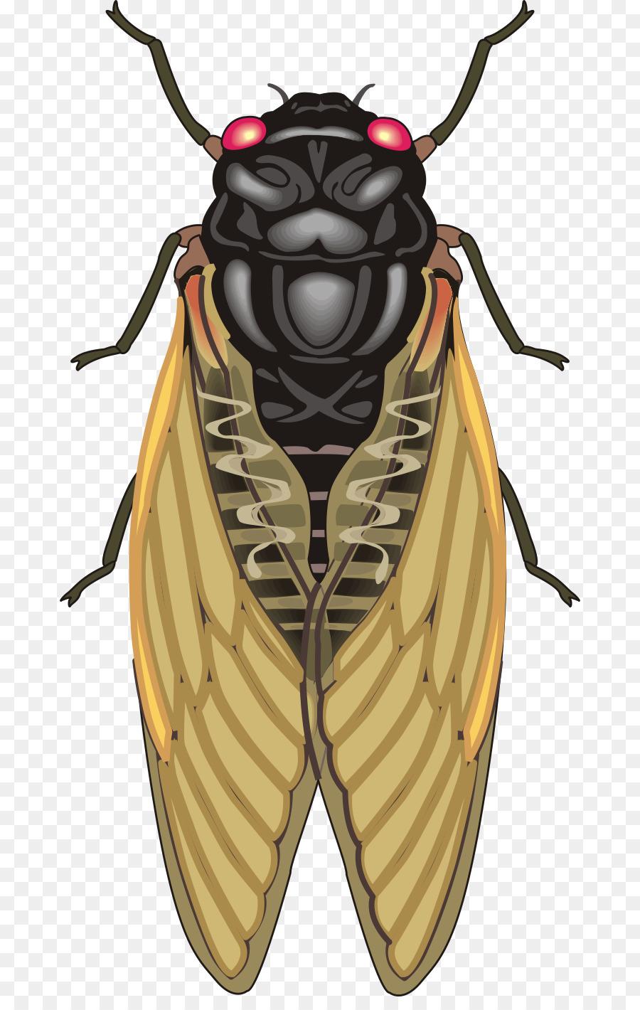 الحشرات, الزيز, الرسم صورة بابوا نيو غينيا