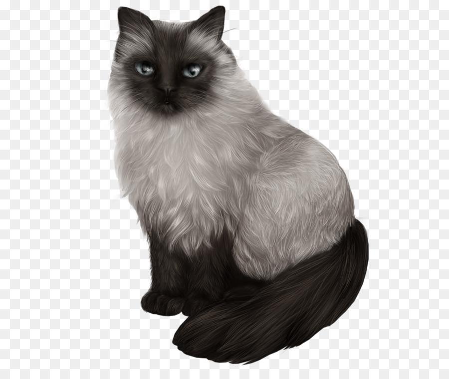 القط السيامي Semi-Longhair Kisspng-himalayan-cat-balinese-cat-siamese-cat-ragdoll-asi-black-cat-5aa924bbd150d8.1483354715210344278574
