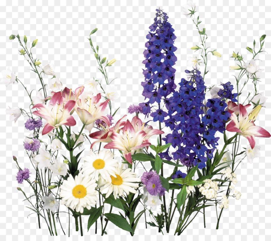 زهرة الحقول الحميلة Kisspng-flower-of-the-fields-chamomile-5abc0cd1a835b4.659850761522273489689