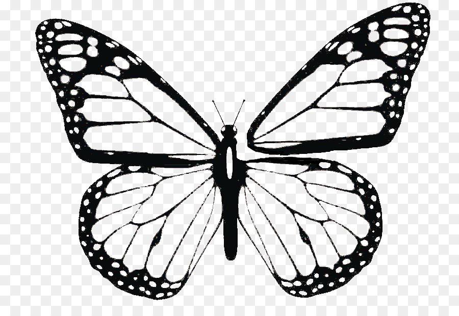 فراشة كتاب تلوين العاهل الفراشة صورة بابوا نيو غينيا