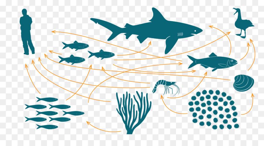 السلسلة الغذائية الشبكة الغذائية النظام الإيكولوجي البحري صورة بابوا نيو غينيا